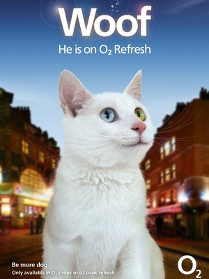 Lucius, Winner of O2 Refresh Happiest Cat casting