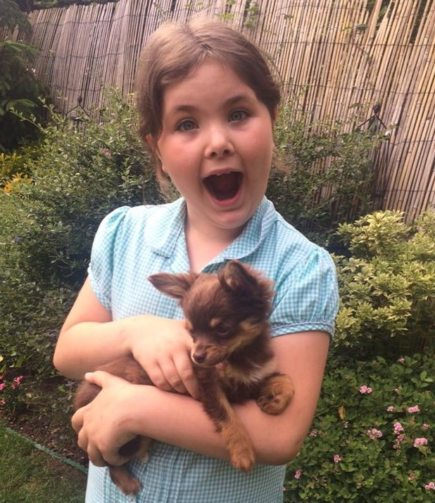 Caramel the chihuahua reunited with 8-year-old Lexie Taylor