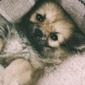 Charlotte Crosby introduces new puppy Baby 4 July