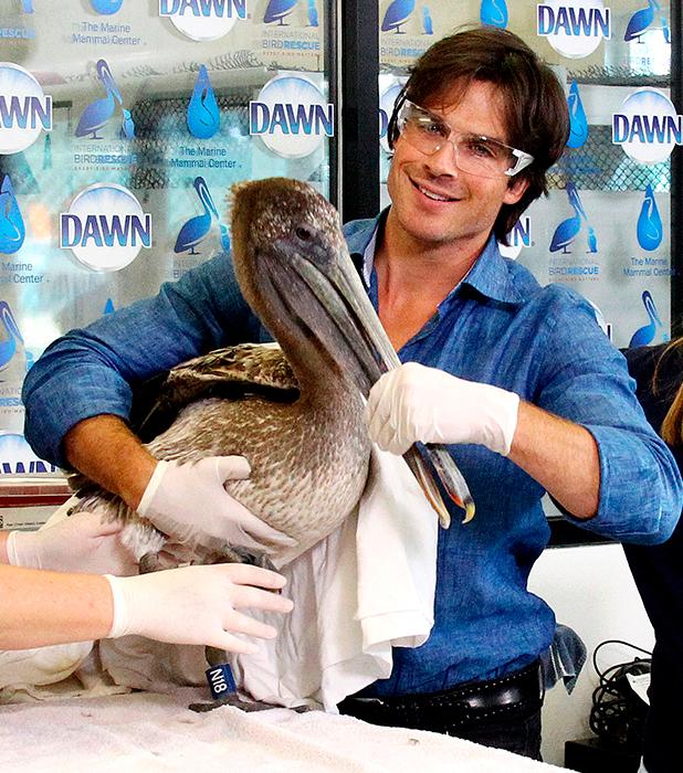 Dawn Wildlife Debut Of 'We All Love Wildlife' Video Series At International Bird Rescue, Los Angeles, America - 09 Jul 2015 Ian Somerhalder