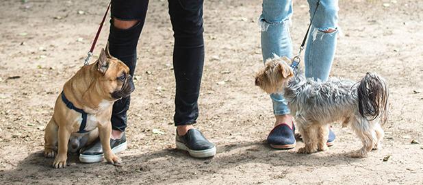 Bobby Cole Norris, Peter Wicks and Ferne McCann on a dog walk 16 Jul 2015