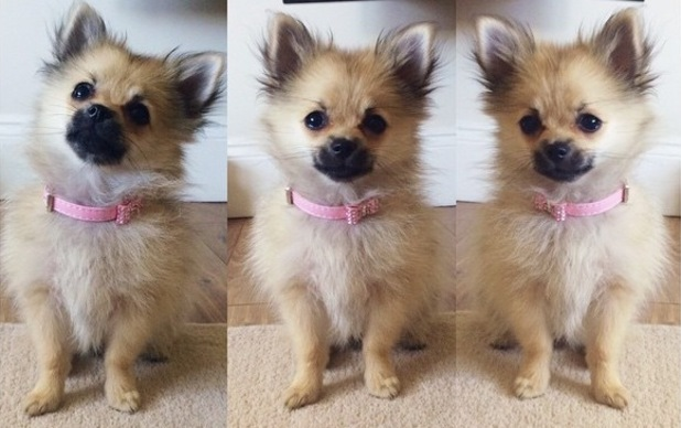 Charlotte Crosby shares collage of puppy Baby 30 July