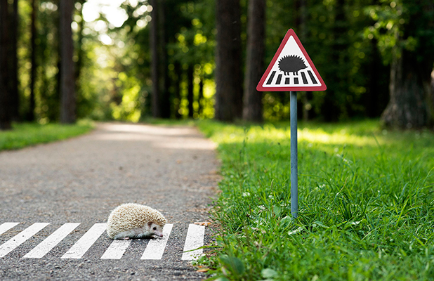 Creative agency design tiny road signs for animals, Vilnius, Lithuania - Jul 2015 Hedgehog
