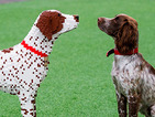 Sully, the UK's 'best furry friend', gets a Lego dog double!