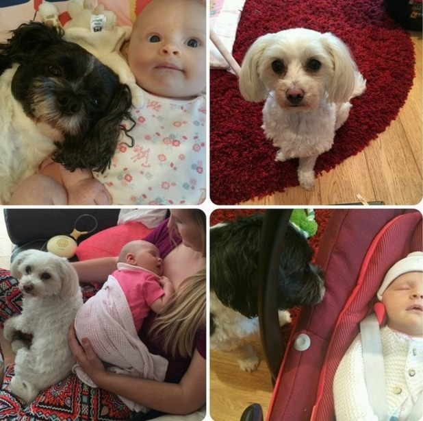 Rebecca Adlington shares photos of Summer and her dogs 26 August