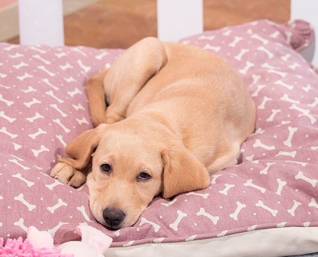 This Morning' TV Programme, London, Britain - 03 Sep 2015 This Morning Puppy - Clover