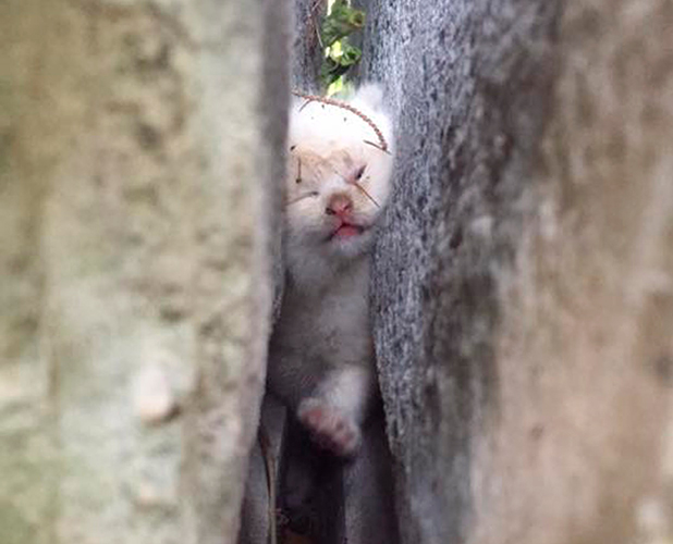 Kitten trapped for two days before being rescued, Johnston, Rhode Island, America - 09 Sep 2015