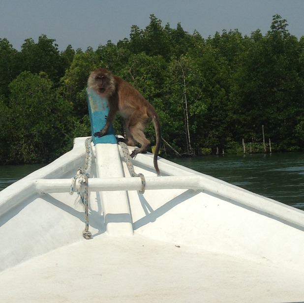 Monkey on our boat in Langkawi, 24/9/15