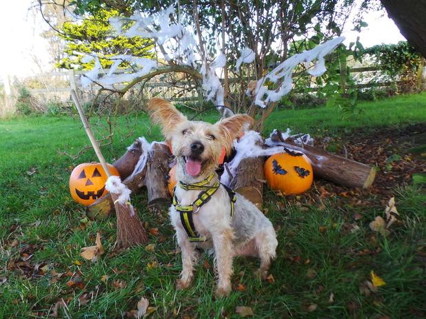 Stanley needs a home! Dogs Trust Shoreham