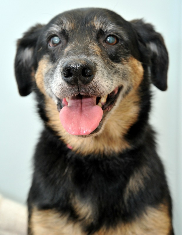 PDSA warns animal owners to be vigilant at Halloween and Bonfire Night Duncan Senior with dog Zakk