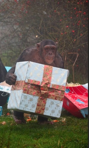 Zookeepers play Santa at ZSL Whipsnade Zoo, December 2015