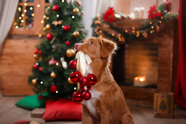 VetPlus tips to keep your pets calm this festive season, December 2015