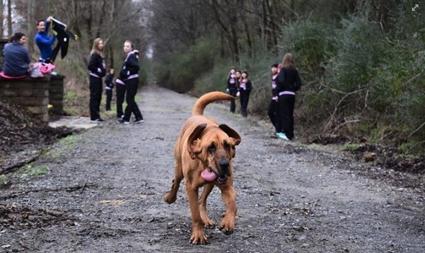 Bloodhound Sneaks Out of Yard to Run Half Marathon and Finishes 7th