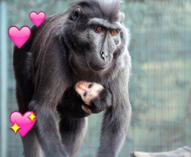 Critically-endangered monkey born at ZSL London Zoo, 18 February 2016