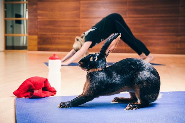 Gym bunny does yoga