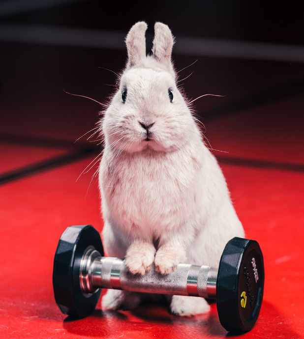 Gym bunny lifting weights