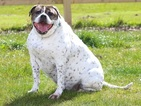 Meet the chubby animals who are PDSA Pet Fit Club's finalists