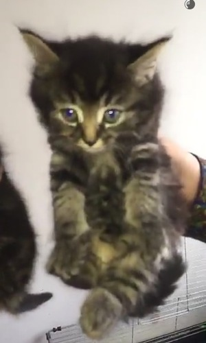 Stephen Bear brings home two new kittens, Bearzy and Simba 20 May