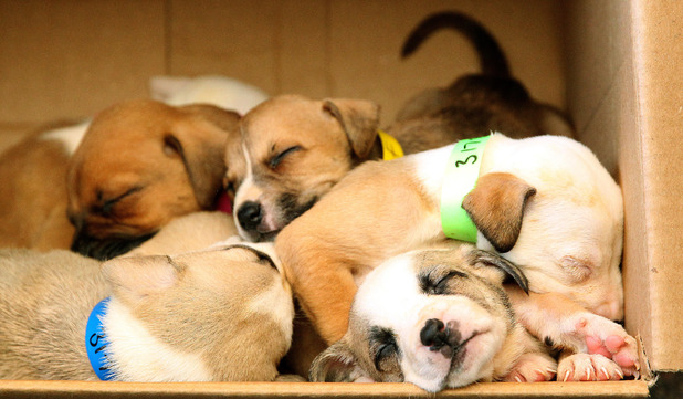 These nine puppies were abandoned in a box but are now on the men after being rescued
