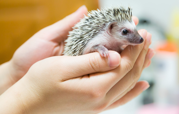 Getting paid £24,000 a year to look after hedgehogs? This has the be the best job ever